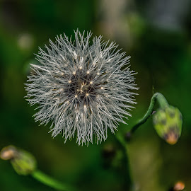 by Vishal Bhatnagar - Nature Up Close Other plants