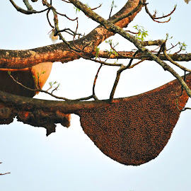 BEE DELIGHT by SANGEETA MENA  - Nature Up Close Hives & Nests