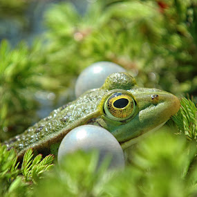 by Nick Vanderperre - Animals Reptiles (  )