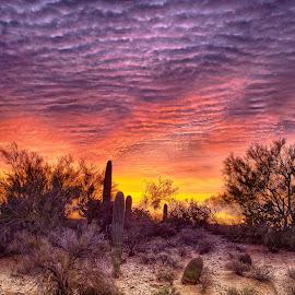 Tucson Sunrise by Charlie Alolkoy - Landscapes Deserts ( arizona, tucson, sunrise, cactus )