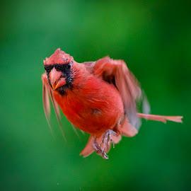 I'm on my way by Marie Schmidt - Animals Birds