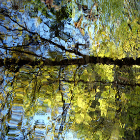 Water Mirror by Fatemeh Azadbakht - Landscapes Forests