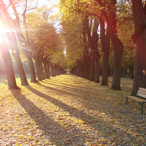 Autumn in the park by Ivan Mendes - City,  Street & Park  City Parks ( park, autumn leaves, autumn, trees, germany, leaves )