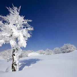 Crăiasa zăpezii...️ by Adrian Urbanek - Nature Up Close Trees & Bushes