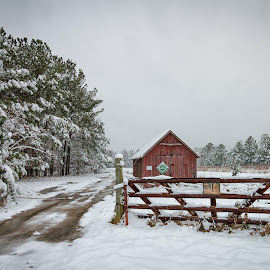 The Tree Farm by Carol Ward - Buildings & Architecture Other Exteriors ( fence, winter scene, winter, snow covered trees, snow, buildings, maryland, landscape, tree farm, snow covered )