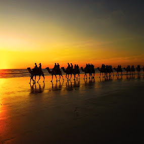 Sunset camel ride by Kay Cypher - Landscapes Beaches ( sunset, riding. orange, camels, ocean, beach, people )
