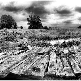 Hidak by Zlatko Sarcevic - Black & White Landscapes ( b&w, lake, bridge, landscape, mező,  )