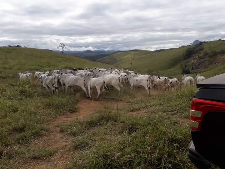 Fazenda / Sítio à venda em Ponte das Garças, Três Rios - Foto 5