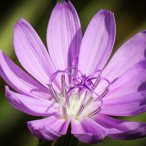 soft purple flower.jpg
