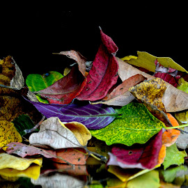 Winter leaves  by Asif Bora - Nature Up Close Leaves & Grasses