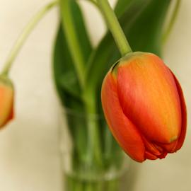 Tulips in a vase. by Morgentau ;) - Flowers Flower Arangements ( orange, vase, orange flower, macro, nature, macro photography, vases, tulip, tulips, flowers, natural, flower )