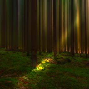M o s s by Manu Heiskanen - Uncategorized All Uncategorized ( manulitoo, wood, green, manulit00, moss, forest, light, paulinawolekpardon )