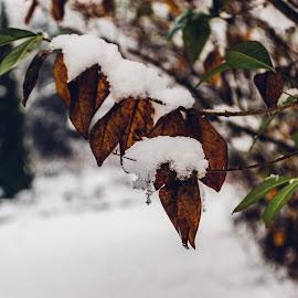 Winter by Máté Csöbönyei - Nature Up Close Gardens & Produce