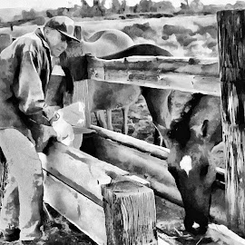 Serving breakfast by Gaylord Mink - Animals Horses ( horses, trough, feeding, bw )