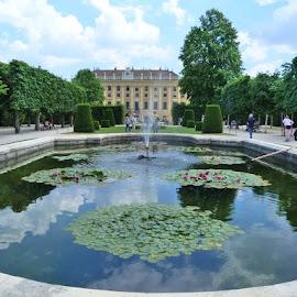 Good morning  by Helena Moravusova - City,  Street & Park  City Parks ( europa, austria, schonbrunn, vienna )