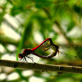 love by Mario Novak - Animals Insects & Spiders
