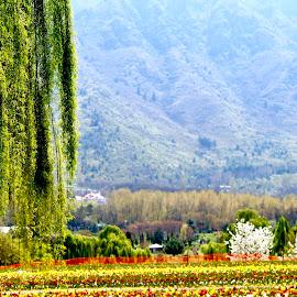 Tulipgarden by Ankur Gautam - City,  Street & Park  City Parks