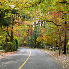 Fall Time Road From Harding Twp. N.J. by Jen Henderson - City,  Street & Park  Street Scenes