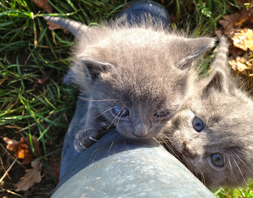 by James Blyth Currie - Animals - Cats Kittens