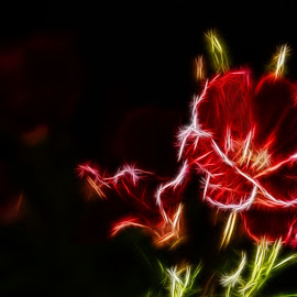 Flowers with outlines by Prasanta Das - Digital Art Things ( morphed, flowers, digital )