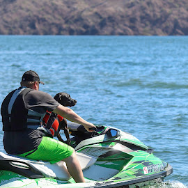 Ready to Ride by Darlene Moyer - Animals - Dogs Playing ( havasu, water, jet ski, dogs in water )