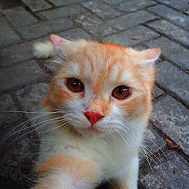 selfie by Kokoro Morri - Animals - Cats Portraits