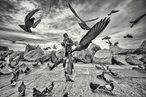 by Gregor Znidarsic - Black & White Street & Candid ( girl, winter, black and white, sea, birds )