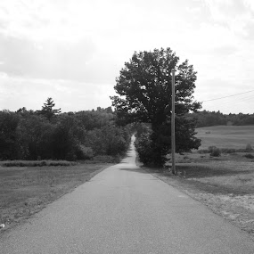 A Special Place by Nick Massar - Landscapes Prairies, Meadows & Fields ( unique, tree, black and white, path, road, nickolasmassar )