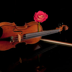 Violin and Rose by Cristobal Garciaferro Rubio - Artistic Objects Musical Instruments ( rose, musical instrument, violin, arc, roses, reflections )