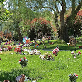 A Pet Cemetery in Los Angeles by Eric Michaels - City,  Street & Park  Cemeteries ( animals, colorful, afternoon, graves, california, cemetery, sunny, serene, pets, trees, los angeles, flowers, shade,  )