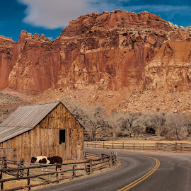 Capitol Reef N.P. by Mike Despot - Landscapes Mountains & Hills ( despot, moab, national park, horses, barn, utah, capital reef, rocks )