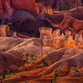 Morning Light by Dewey Farmer - Landscapes Deserts ( sand, natural light, desert, green, white, yellow, landscape, shadows, contrast, national park, red, nature, utah, sunrise, natural, light, bryce canyon )
