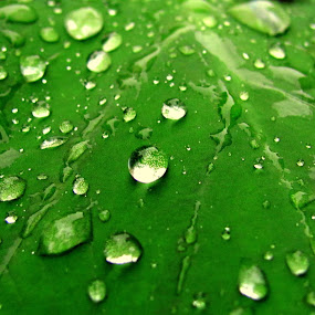 AFTER RAIN by Srabani Mitra - Nature Up Close Leaves & Grasses ( leaves )