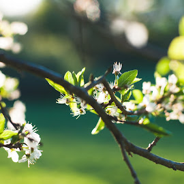 Spring by Inese Keiša - Nature Up Close Trees & Bushes (  )
