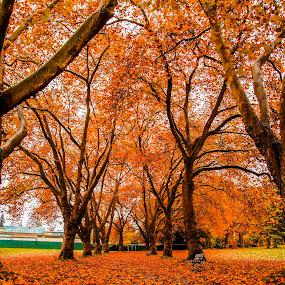 Stanley Park by Peter Murphy - City,  Street & Park  City Parks (  )