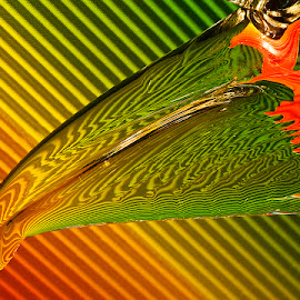 Glass Beak by Þorsteinn H. Ingibergsson - Artistic Objects Glass ( iceland, colors, still life, glass, structor )