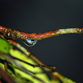 drop by Yanuunay Wibowo - Nature Up Close Water ( water, wood, nature, stone, night, high )