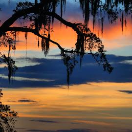 Nature art by Ivy Luna - Landscapes Sunsets & Sunrises