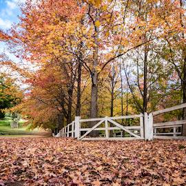 Autumn Fall by Mel Stratton - City,  Street & Park  Neighborhoods ( fall, leaves, autumn, trees, fence, landscape,  )