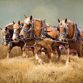 Teamwork by Kim Wilhite - Digital Art Animals ( equine photography, draft horses, digital art, hay fields, horse photography, farm fields )