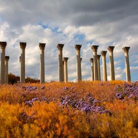 Capitol Columns at the National Arboretum by Vicki Pardoe - Buildings & Architecture Public & Historical ( national arboretum, national capitol columns, arboretum, pilars, capitol columns )