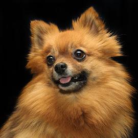 by Jane Bjerkli - Animals - Dogs Portraits