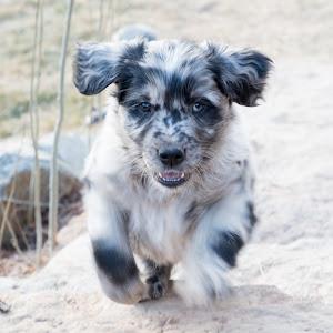 Puppies-186.jpg