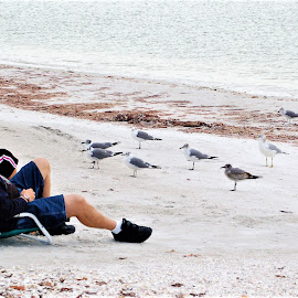 Birds Watching People Watching Birds, Lover's Key, Florida by Sheri Harper - People Street & Candids ( bird, fl, birdwatch, florida, lover's key, people )