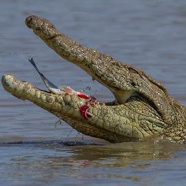 by Nobby Clarke - Animals Amphibians