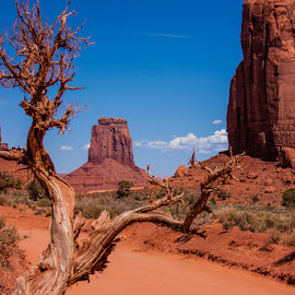 Only Juniper in Monument Valley UT With No Pollen! by Jan Irons - Landscapes Travel ( navajo, monument valley, juniper, utah, allergies,  )