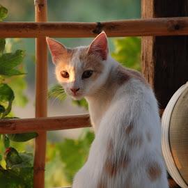 by Pixie Simona - Animals - Cats Portraits ( cat, cat portrait, kitty,  )