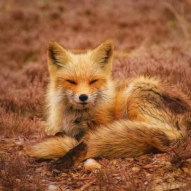 by Steve Arthur - Animals Other Mammals