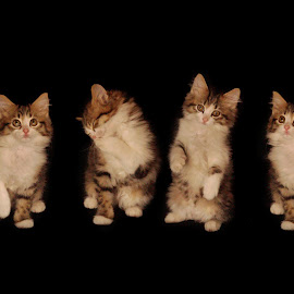 Little kittens by Lize Hill - Animals - Cats Kittens