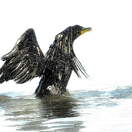 Out Of The Water by Sheen Deis - Digital Art Animals ( nature, cormorants, water birds, birds,  )
